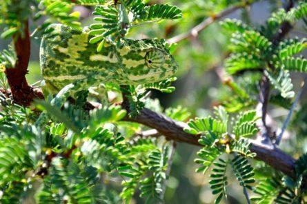 04 maskirovka xameleon