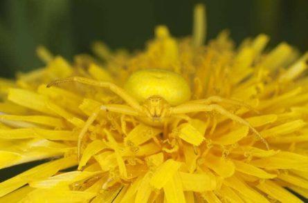 05 maskirovka zvetochniy pauk