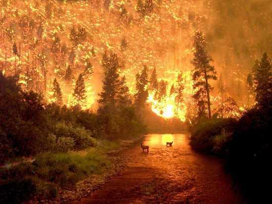 Пожар в Национальном парке Биттеррут (США)