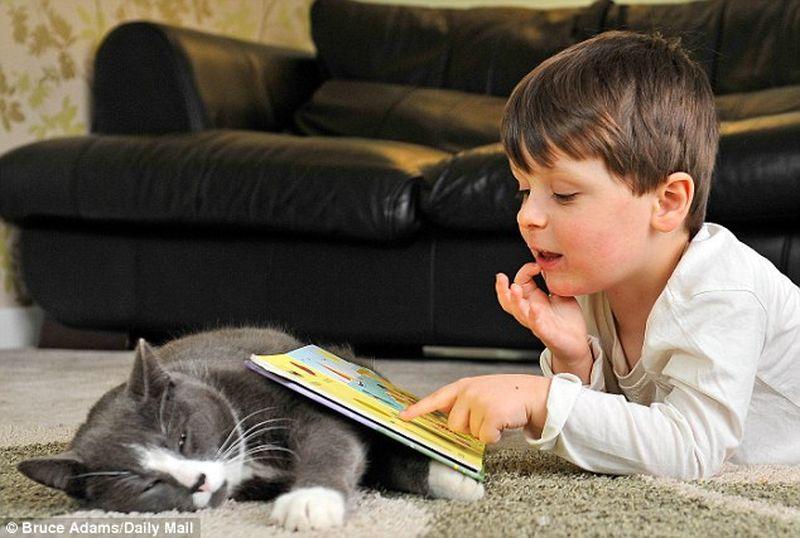 Как бездомный кот помог больному мальчику (6 фото)