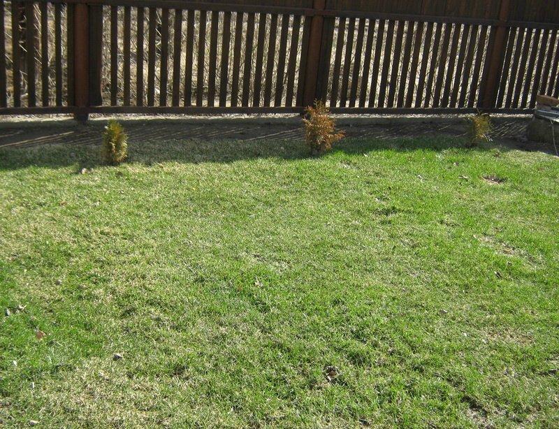 Красивый газон своими руками (личный опыт: статья + 11 фото)
