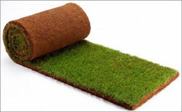 Какими бывают газоны и как правильно их вырастить?
