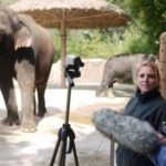 Говорящий слон (видео + статья + 3 фото)