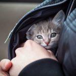 Если мужчина приносит в дом котёнка с улицы…