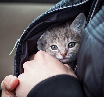 Если мужчина приносит в дом котёнка с улицы...