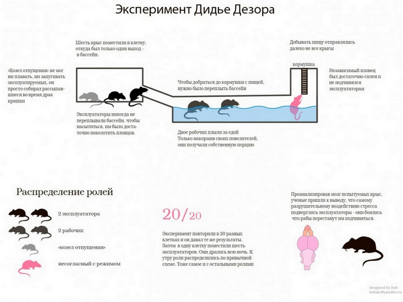 krisinoe_obschestvo