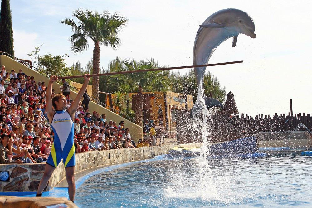 История взаимоотношений людей и дельфинов