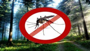 Лучшие народные средства от комаров и других насекомых