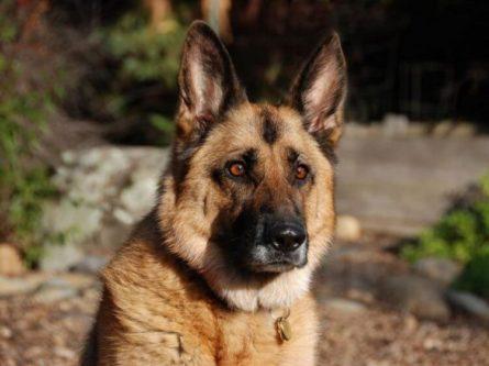 Пронзительная история о том, как старый пёс спас в человеке — человека