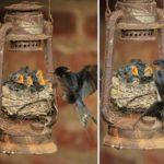 Птичьи гнёзда в самых неожиданных местах (18 фото)
