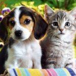 «Мы — симпатяги» (15 милых фото кошек и собак)