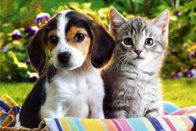 """""""Мы - симпатяги"""" (15 милых фото кошек и собак)"""