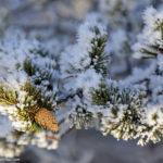 «Лапландия — сказочная страна» (фоторепортаж из родной деревни Санта Клауса, 49 фото с комментариями + видео)