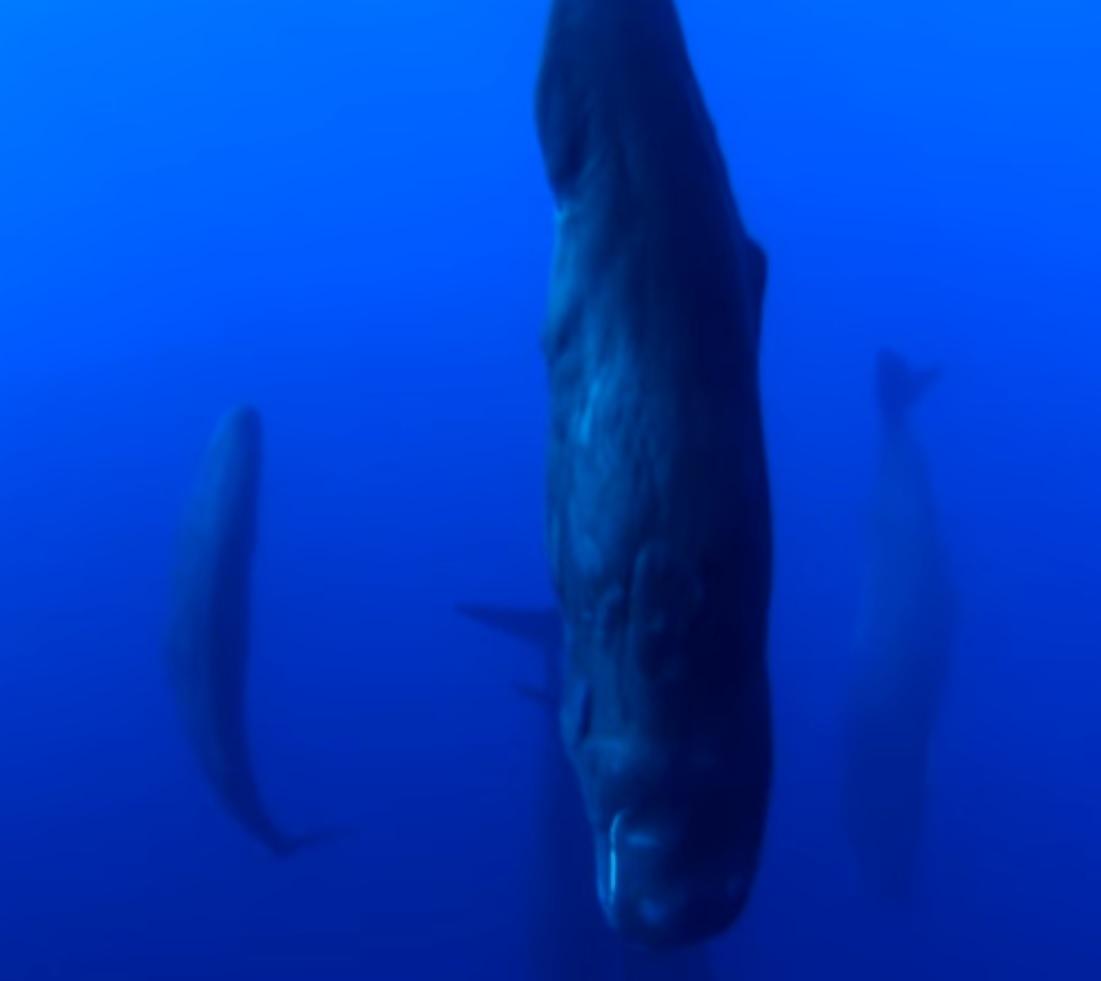 Величественные гиганты. Как выглядят спящие киты (видео)