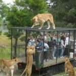 WTF: Справедливый зоопарк (фото)