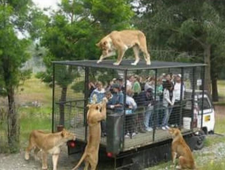 spravedliviy_zoopark