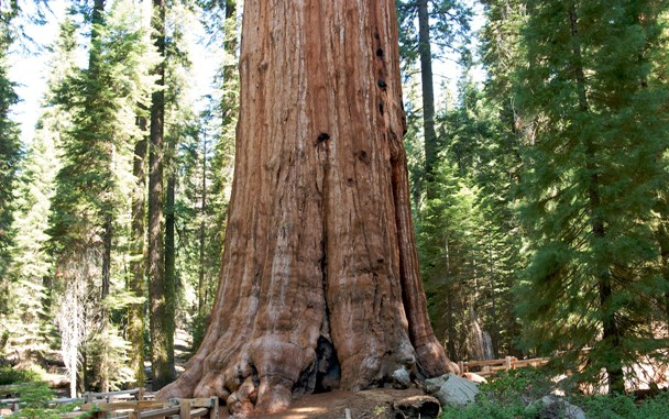 Удивительные деревья (10 фото)