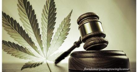 Врач рассказал, почему нельзя легализовывать марихуану. Она становится все убийственнее с каждым годом!
