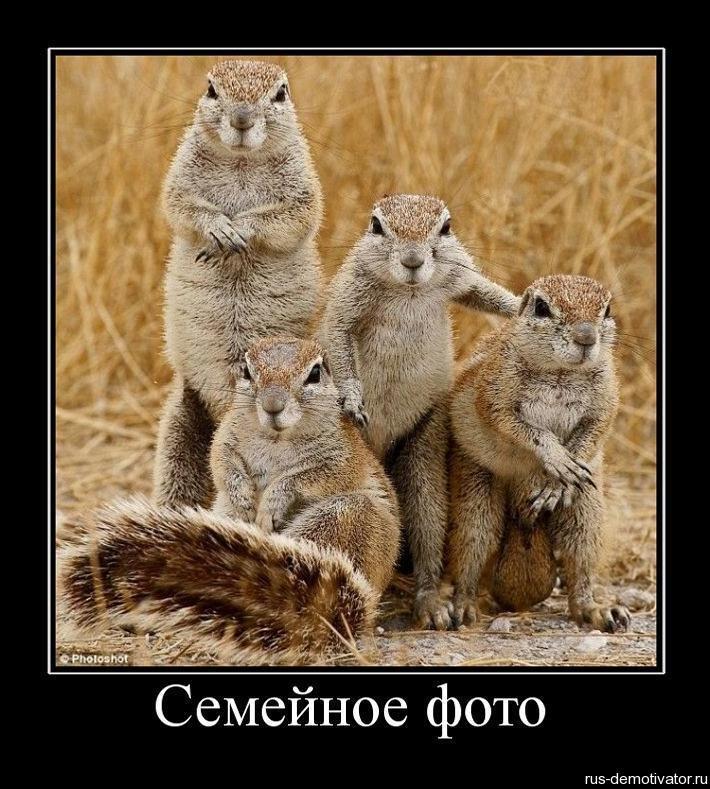 Эти забавные животные (демотиваторы)