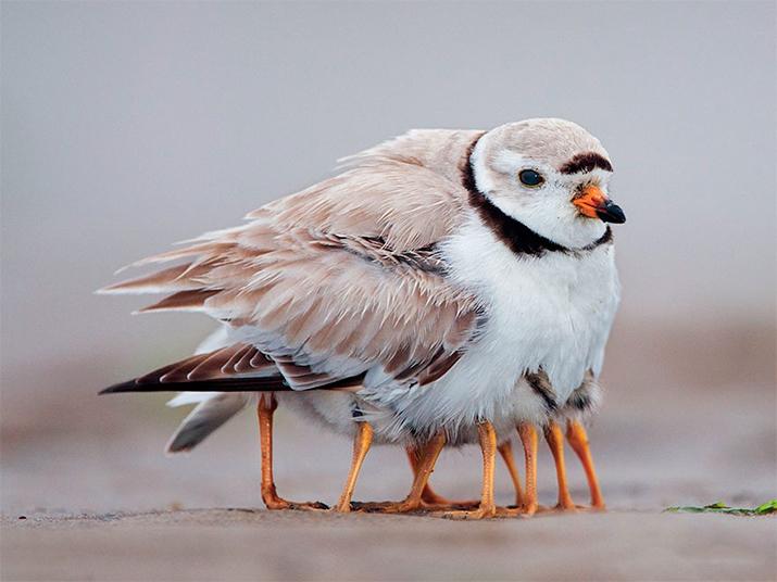 Животные-родители (22 милейших фото)